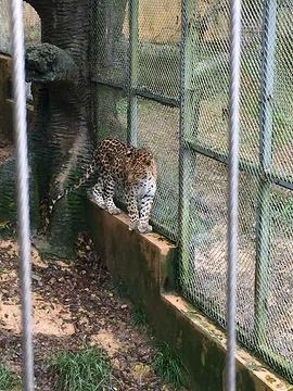 雅戈尔动物园旅游景点攻略图