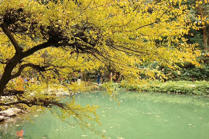 """""""爱晚亭已经成为游客来岳麓山必须拍照打卡的地标景点,五颜六色的树木和惨白的天空,秋日的颜色和长沙..._爱晚亭""""的评论图片"""