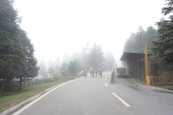 仙女山森林公园图片