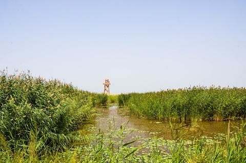 博斯腾湖南岸景区