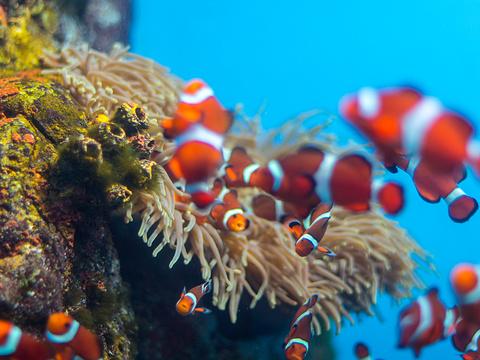 登别海洋公园尼克斯旅游景点图片