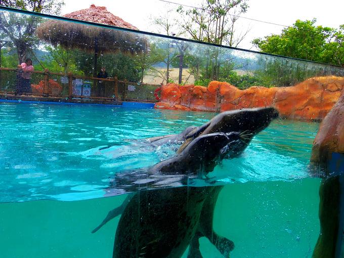 斑海豹图片