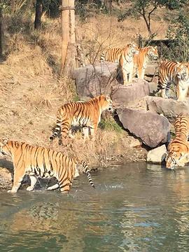 雅戈尔动物园的图片