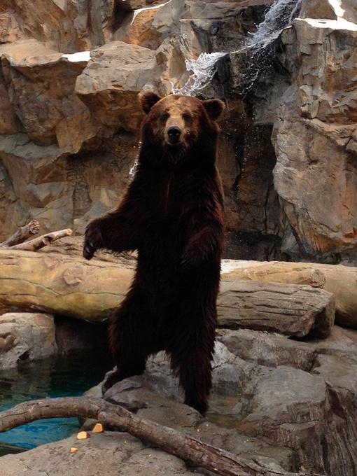 北极熊馆图片