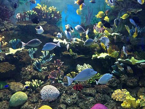 金鹰海洋世界旅游景点攻略图