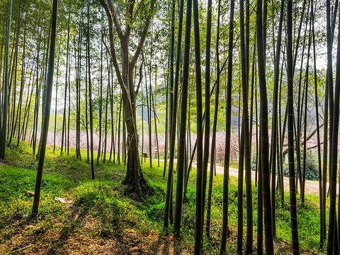 南京将军山旅游风景区旅游景点图片