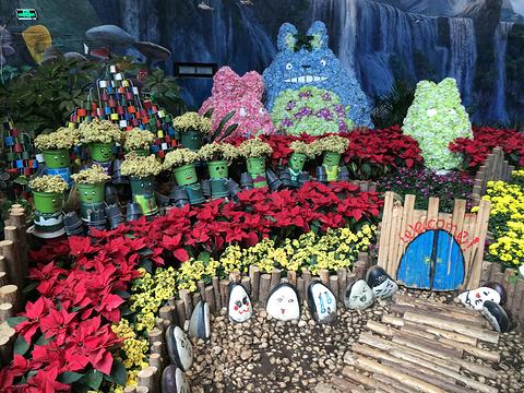 花之城旅游景点图片