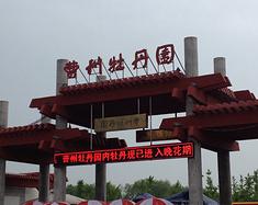 菏泽曹州牡丹园