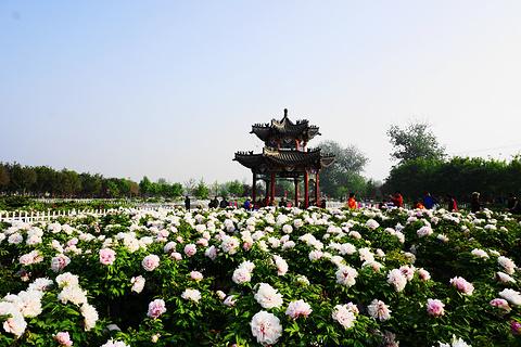曹州牡丹园的图片
