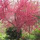 禹州森林植物园