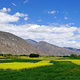 邦杰塘草原