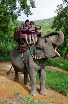 美莎大象营旅游景点攻略图