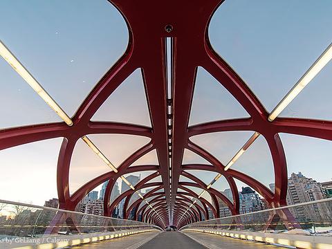 Peace Bridge旅游景点图片