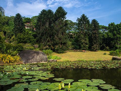 厦门园林植物园旅游景点图片