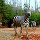 云南野生动物园