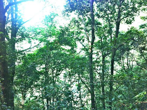 森林氧吧旅游景点攻略图