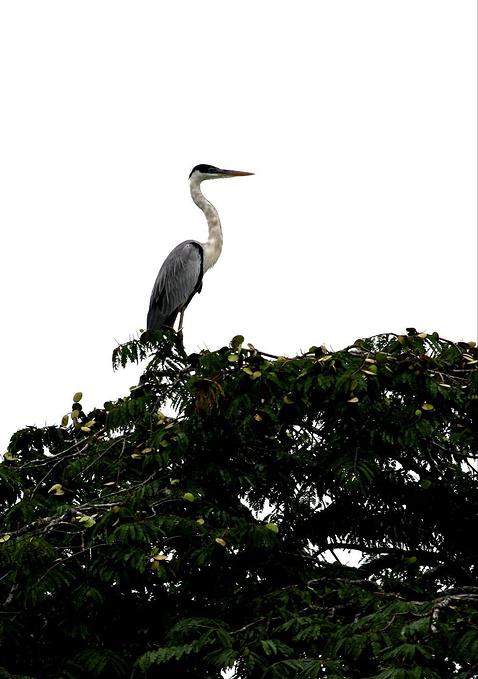 亚马逊河航行图片