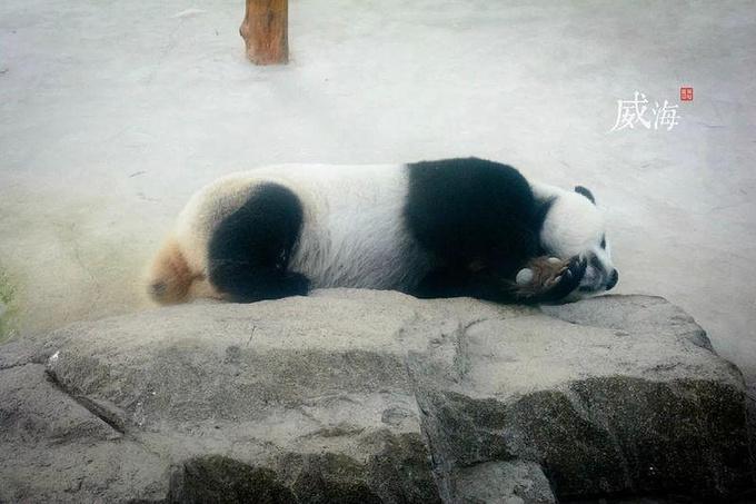 刘公岛国家森林公园图片
