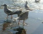 滇池生态景观湿地公园
