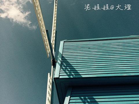 银桥花海旅游景点图片