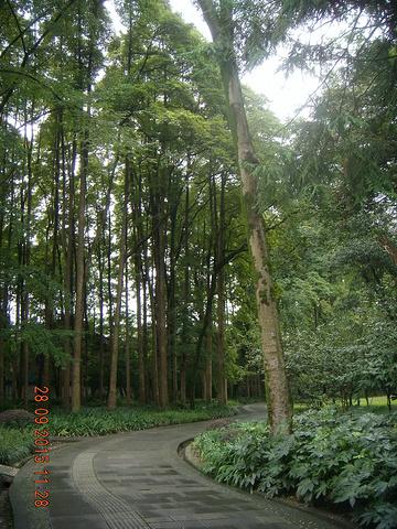 """""""...离子空气是多么的沁人心脾,古椿园里的高大椿树将公园妆点得相当神秘,可在这里小坐、锻炼一下身体哟_离堆公园""""的评论图片"""