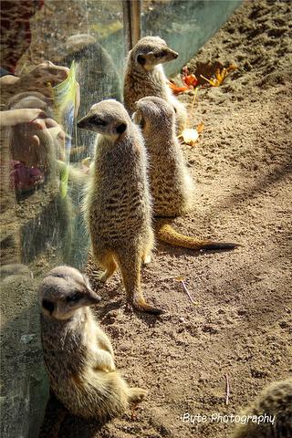 """""""跳蚤市场只是无意中的一个插曲,今天的主戏..._墨尔本动物园""""的评论图片"""