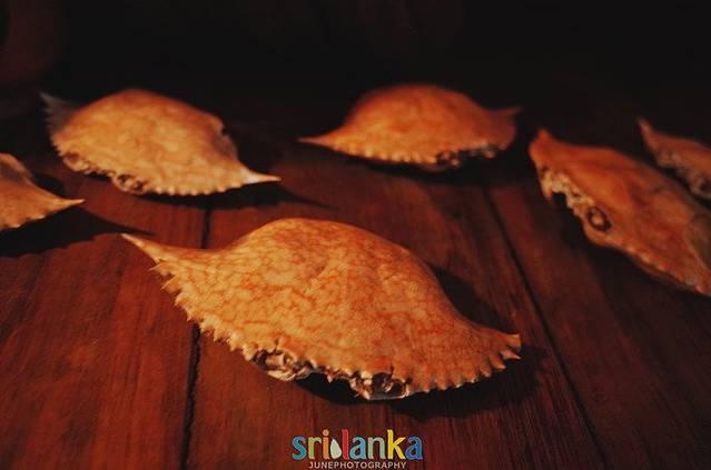 迎接暴风雨洗礼的旅行,斯里兰卡,我来了!
