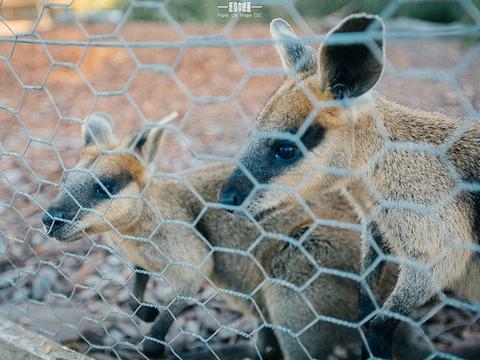 华勒比野生动物园旅游景点图片