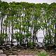 红树林自然保护区