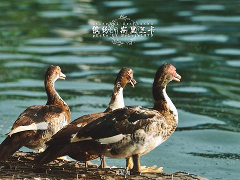 贝拉湖旅游景点图片