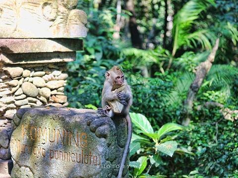 圣猴森林避难所旅游景点图片