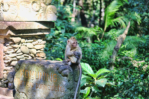 圣猴森林避难所的图片