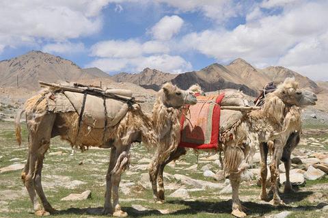 白沙山沙漠景区