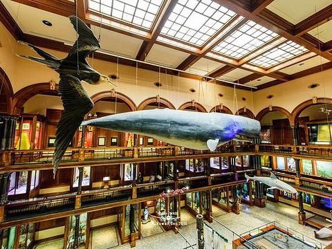 毕夏普博物馆旅游景点图片