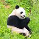 都江堰中华大熊猫苑(原熊猫乐园)