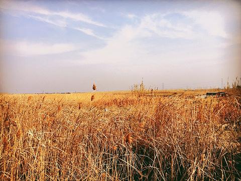 杭州湾国家湿地公园旅游景点攻略图
