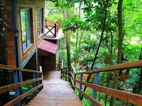流溪河国家森林公园旅游景点图片