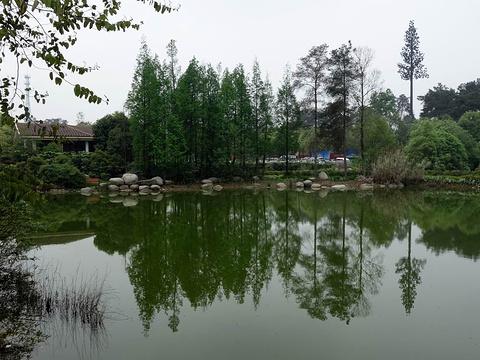 石象湖旅游景点图片