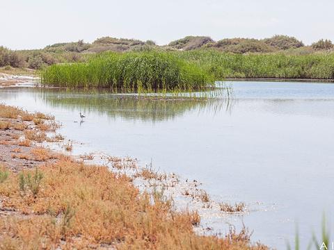 艾里克湖旅游景点图片