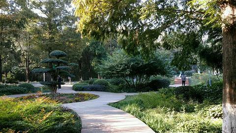 相山公园的图片