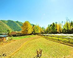 丽江、腾冲、和顺,遇见金色的秋天