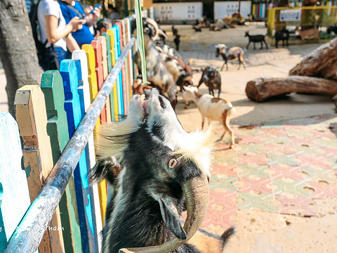 西贡草禽园旅游景点图片