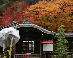秋意正浓,升龙道的枫叶红得正好