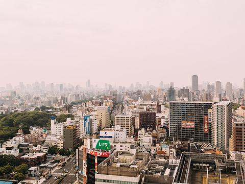阿倍野Harukas 300观景台旅游景点图片