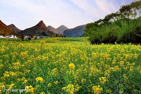 罗平樱花旅游景点攻略图