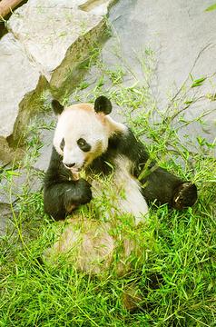 下渚湖熊猫园的图片