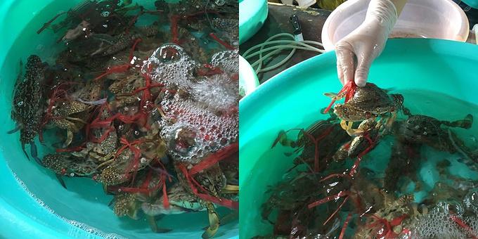 南湾海鲜市场图片