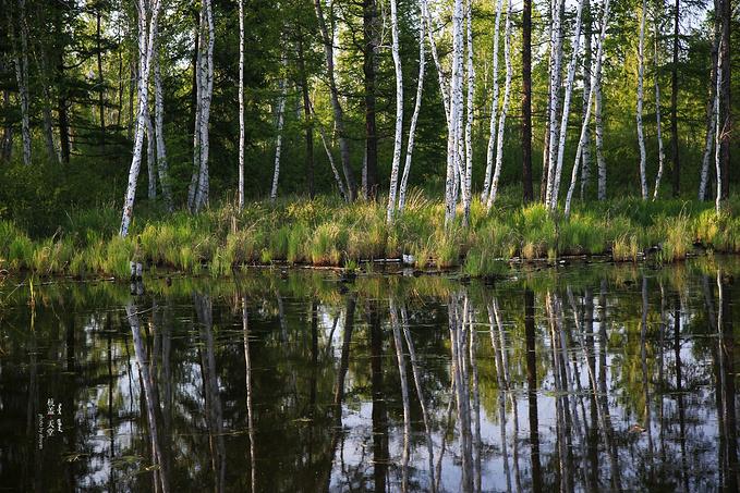 根河源国家湿地公园图片