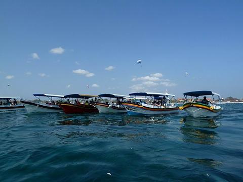海龟岛的图片