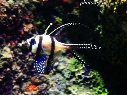 墨尔本水族馆旅游景点图片